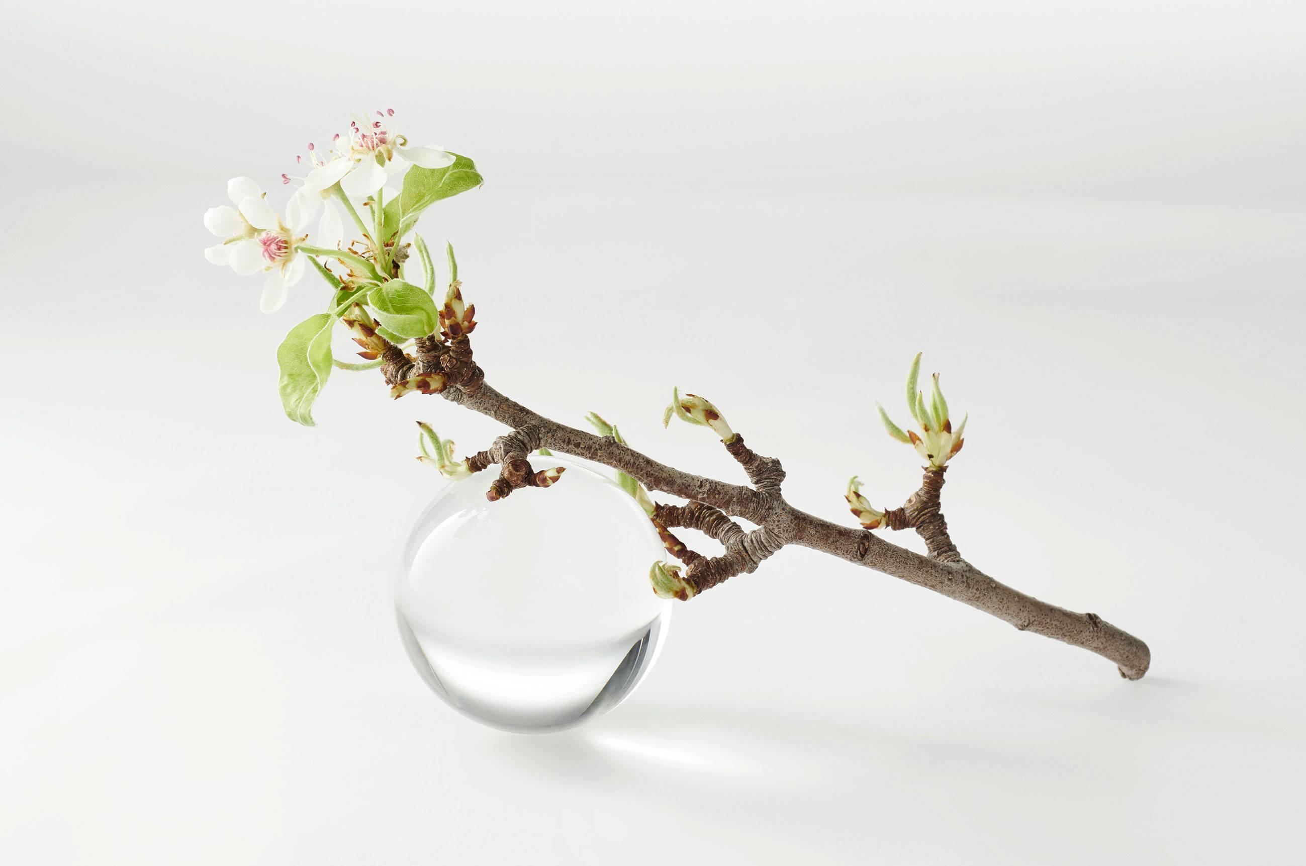 neoboemi Natural Apfelzweig WF 0104 gezoomt - قناع الخلايا الجذعية للتفاح والهيالورون